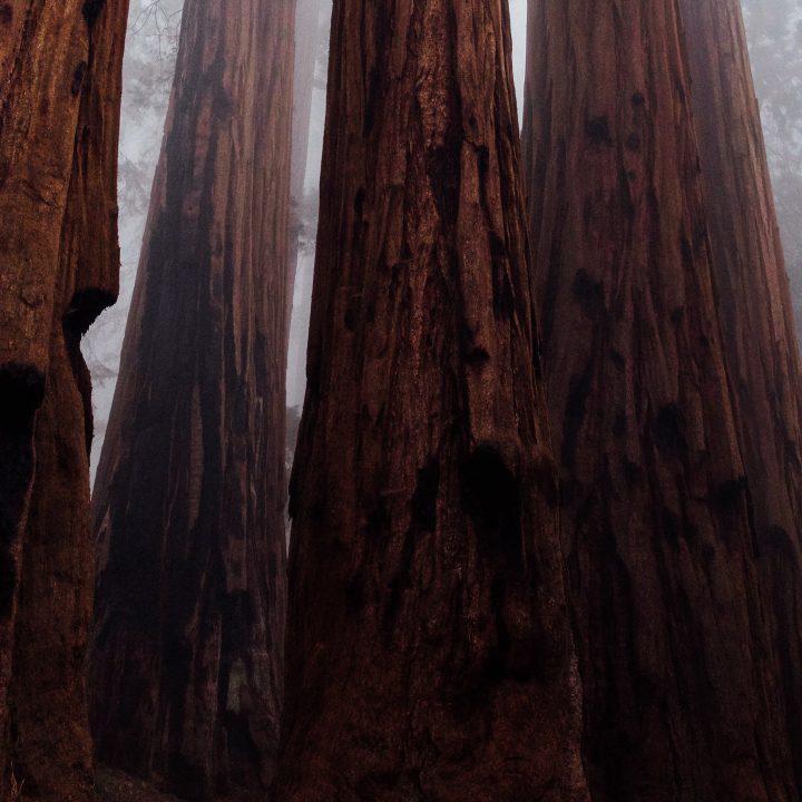 Foto de árvore no parque Yosemite, na região da Califónia, ótima para fazer curso de inglês.