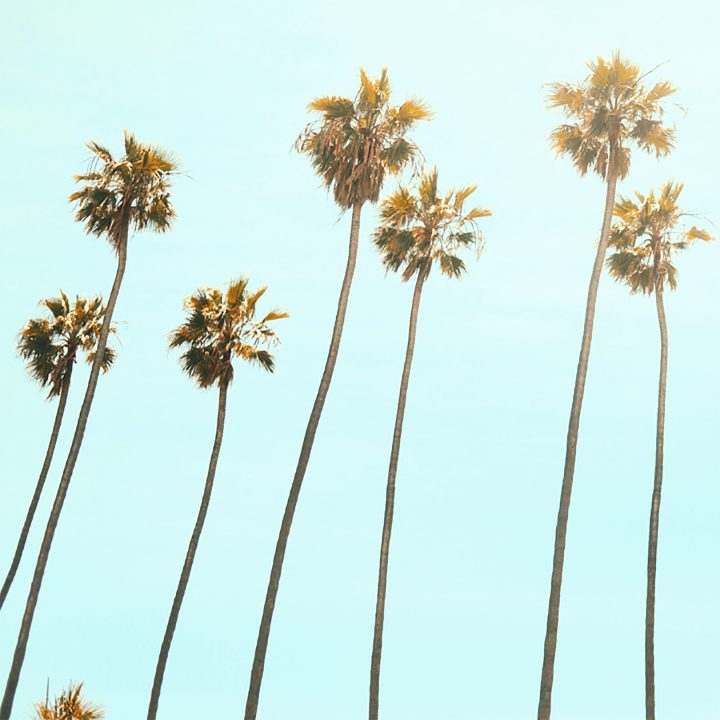 Foto de palmeiras retratando intercambio para Australia, Canada, Irlanda e Nova Zelândia.
