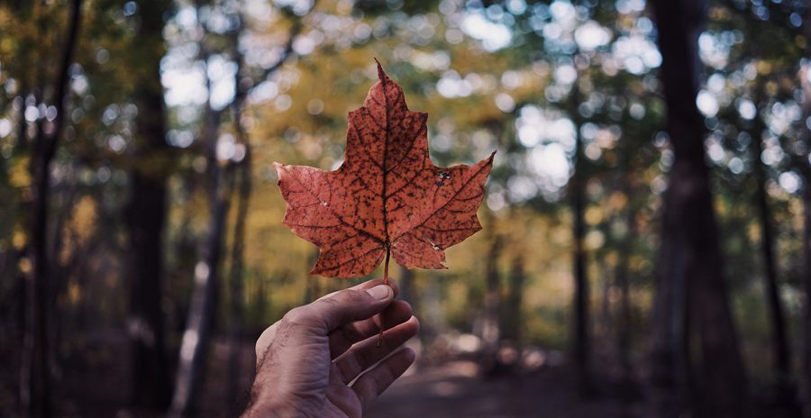 folha da bandeira do canadá